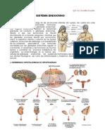 Contenido 10 Sistema Endocrino