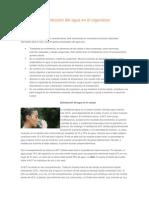 Funciones y Distribución Del Agua en El Organismo