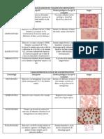 8-anormalidades eritrocitos (2) (1).docx