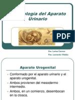 embriologiaaparatourinario-110317185222-phpapp01