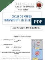 Chi_2014_Ciclo de Krebs.pptx