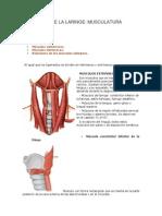 4 Anatomia de La Laringe