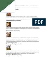 Aquí Os Presentamos Una Serie de Esencias Florales de África y Canarias