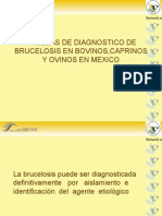 BRUCELOSIS DIC.ppt