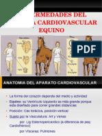 Enfermedades Del Sistema Cardio Vascular Equino
