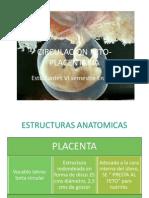 Circulacion Feto Placentaria