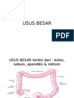 Fisiologi Usus Besar