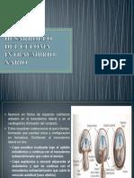 Desarrollo Del Celoma Intraembrio-nario