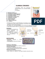 2.- Glanula Tiroides Completo