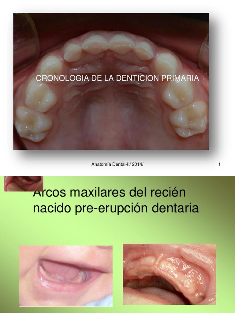Anat Dental II