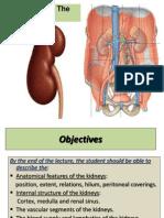 Anatomy of Kidney