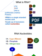 rna ppt revised1