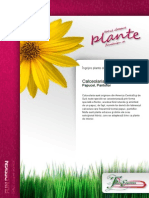 Calceolaria Ingrijirea Plantelor