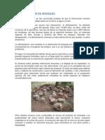 Deforestación de Bosques