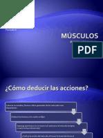 12 Nomenclatura de músculos sitios debiles bolsas serosas