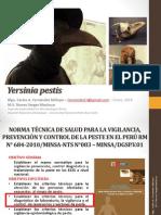 yersiniapestis-140517001417-phpapp01