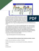 P Glicoproteina
