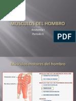 8 Músculos del hombro y brazo