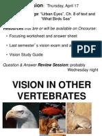vision Biology
