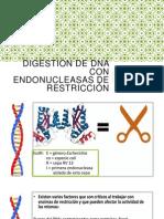 Digestión de DNA Con Endonucleasas de Restricción
