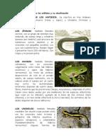 Anfibios y Su Clasificación
