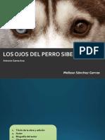 Los Ojos Del Perro Siberiano