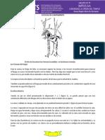 Astucias de Campamento.pdf