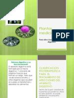 Presentación Plantas Del Sis Digestivo