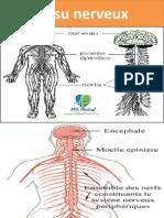 Tissu nerveux.pptx