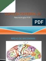 Corteza Cerebral (II)...
