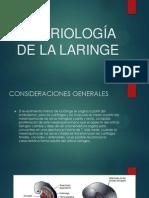 Embriología de La Laringe