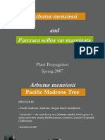 Arbutus Menziesii and Frucreaea Selloa Var Marginata