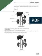 Resumen Cirugia General