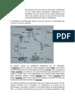 Hongos y Briofitas
