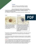 Entamoeba Histolytica Dispar e Coli