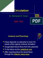 1 Fetal Circulation