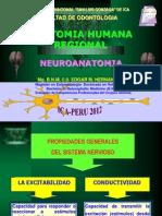 Neuroanatomia 2012.pptx