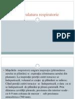 Muschii respiratori