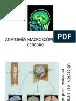 Anatomía Macroscópica Del Cerebro 24 de Mayo (1)