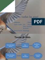 Cómo Vuelas Las Aves