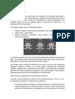 canales ionicos 2.docx