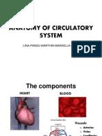 Anatomy of Circulatory System