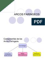 38446733 Arcos Faringeos