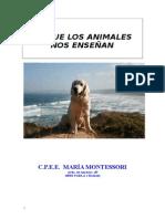 Lo Que Los Animales Nos Enseñan