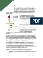 Proteínas GPI