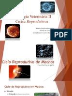 Fisiologia Veterinária II - Ciclos Reprodutivos Bovinos e Ovinos