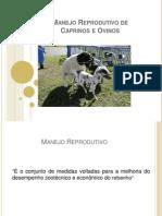 Manejo Reprodutivo de Caprinos e Ovinos