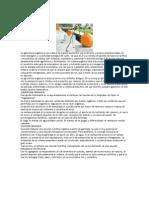 LA OPCION ORGANICA Solucion Nutritiva