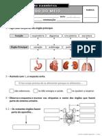 Ficha de Avaliação Diagnóstica - 4º ano EM II