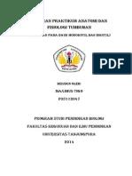 Laporan Praktikum Anatomi Dan Fisiologi Tumbuhan Daun